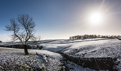 postcard (Phil-Gregory) Tags: nikon naturephotography national naturalphotography nature naturalworld nationalpark d7200 derbyshire sky scenicsnotjustlandscapes snow trees tree sunburst blue wall stonewall peakdistrict landscapes