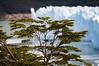 Glaciar Perito Moreno (cuiti78) Tags: glaciar perito moreno santa cruz argentina patagonia