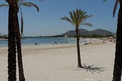 Platja d´Alcudia - Mallorca - Spain (Peter Goll thx for +6.000.000 views) Tags: 2014 mallorca urlaub platjad´alcudia alcudia spain spanien malle majorca beach palme sea landscape landschaft seascape nikon nikkor d800 holiday vacation