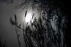 Lifelong Stories (Dawnsview) Tags: moonlight moonrise moon grace
