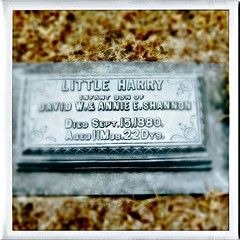 Little Harry (pam's pics-) Tags: washingtoncountykansas us usa america cemetery joycreekcemetery historic midwest pamspics pammorris hollenbergkansas monument infant 1880 appleiphone hipsta hipstamatic mobilephonephotography cameraphone iphone7 grave graveyard death