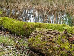 BS, Natur am Südsee (bleibend) Tags: 2018 bs braunschweig südsee natur nature naturschutzgebiet naherholung naherholungsgebiet olympus olympusomd olympusem5 omd em5 leicasummilux25mmf14