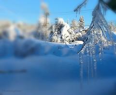 Nature's Art (evakongshavn) Tags: icecicles ice icespikes icecrystal snow snowy snowfall winter winterwonderland winterwald winterlandscape hivernal hiver new light white blue sundaylights