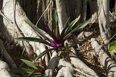 bloom (ucumari photography) Tags: ucumariphotography naples florida fl zoo january 2018 dsc5537
