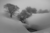 Polar (AvideCai) Tags: avidecai bn blancoynegro nieve paisaje canon1635 arboles