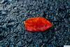 DJR_3227 (DJR-FOTO) Tags: deutschland dortmund djrfoto 4k uhd leave blatt asphalt rot grau