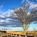 Plum Island Tree