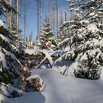 Harz-Oderbrueck_e-m10_1012074106 thumbnail