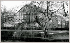 Glass Ice House (* RICHARD M (7+ MILLION VIEWS)) Tags: january winter wintertime coldweather frost frosty ice freezing frozen scapes mono blackwhite heskethpark heskethparkconservatoryconservatories conservatories glasshouse architecture victorianarchitecture parks publicparks parkland trees willowtree weepingwillow glass windows paths pathways lakeside cold southport sefton merseyside barebranches belowzero icey icy icecold freezingcold winterweather