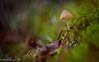 Solitude (Sheldon Emberly) Tags: mushroom mosses toadstool nature natural overcast rainy