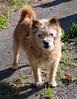 "Walk to 82 Negoroji-023 (photozaki) Tags: ""dogs cats"" dog dogs inu cat cats neko shikoku japan ohenro88 ohenro pilgrimage"