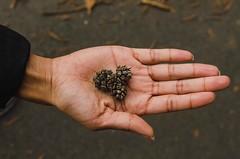 Pine heart (Marc Rainey Jr.) Tags: virginia love heart heartshaped beautiful pretty hand nikon pinecone pine outdoors nature
