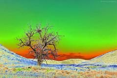 Lonesome Tree - Oregon (Electric Crayon) Tags: tree canyon solarize specialeffects surreal photoshop oregon umatillacounty usa unitedstates america electriccrayon patrickmcmanus