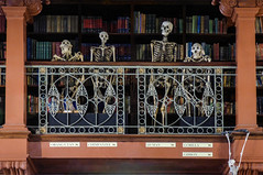 The Planet of the Apes (Steve Taylor (Photography)) Tags: orangutan chimpanzee human gorilla gibbon books library skeleton bones man apes monkey balcony animal architecture museum uk gb england greatbritain unitedkingdom london grantmuseumofzoology