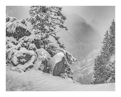 Mountains in a Winter Storm (rich trinter photos) Tags: mountrainier winter ashford washington unitedstates us landscape trinterphotos snow blackandwhite monochrome mountains tree storm boulders alpine