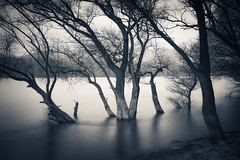 Twoness (RobertFenyo) Tags: landscape river riverside atmosphere nature mood moody monochrome tranquility