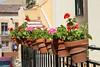Vacances_5500 (Joanbrebo) Tags: sepúlveda castillayleón españa es segovia canoneos80d eosd efs1855mmf3556isstm autofocus cityscape flors flores flowers fleur fiori blumen blossom