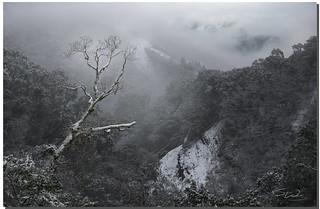 Lone Tree, 思源啞口, Taiwan