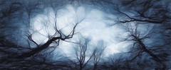 Sky veins (Pejasar) Tags: sky veins blue trees branches minshallpark tulsa oklahoma paintcreations painterly art artistic