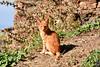 Châton prenant la pose (Ath Salem) Tags: algérie algeria argelia nikond5200 dz africa afrique northafrica maghreb tiziouzou cat chat قط animal wildcat kitten châton