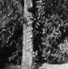 8914.tree (Greg.photographie) Tags: semflex t950 mediumformat 6x6 moyenformat f45 75mm film analog shanghai gp3 r09 noiretblanc bw blackandwhite tree arbre