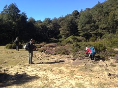 Myrtle forest opeining (Royal Tasmanian Botanical Gardens) Tags: img7221 jawood australia tasmania centralhighlands centralplateauconservationarea projectionbluff geo:country=australia geo:state=tasmania bibet2018