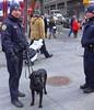 Times Square, NYC -   IMG_20180120_064646 (mshnaya ☺) Tags: dog life nyc new york city big 🍎 flickr candid leica leicac compact camera point shoot genre