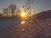 GOLDEN LIGHT P1211613 (hans 1960) Tags: winter 2018 schnee snow frost trees hecken weg way januar licht light outdoor nature natur landsschaft landscape himmel sky sun sonne sol soleil home heimat germany wasser spiegelung mirrow