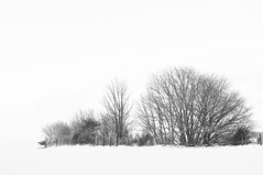 Winter Trees (magaroonie) Tags: 7daysofshooting week29 serene blackandwhitewednesday