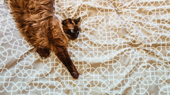 05.01.2018 (Fregoli Cotard) Tags: mimi mimitheprincess mimiprintese kitty sleepykitty sleepingcat sleepycat sleepingkitty funnysleep funnysleepposition sleepingpostion bedsheets bedsheetlove inbed cutebed bed beddingpattern pattern flatlay flatlaycat cut cat cutecat catsofflickr burmesecat birmanese birman birmancat fluffykitty brownlicious browncat dailyjournal dailyphotography dailyproject dailyphoto dailyphotograph dailychallenge everyday everydayphoto everydayphotography everydayjournal aphotoeveryday 365everyday 365daily 365 365dailyproject 365dailyphoto 365dailyphotography 365project 365photoproject 365photography 365photos 365photochallenge 365challenge photodiary photojournal photographicaljournal visualjournal visualdiary 4365 4of365