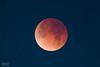 #Supermoon blue blood lunar eclipse (Mario De Leo) Tags: supermoon blood eclipse lunar blue california riverside university celestron telescope canon rebel t2i accrama mariodeleo red