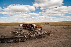 39369-012: Strengthening Carbon Financing for Regional Grassland Management in Mongolia (Asian Development Bank) Tags: mongolia mng khentiiprovince 39369 39369012 horses livestock animals laboranimals rural province outdoor agriculturalactivities agriculture