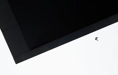 Flight roof (Wilflingseder) Tags: architekturundmensch blackandwhite artist mammal person trainer performer outdoor einfarbig collar austria tourist geometrie europe urban mono nikon