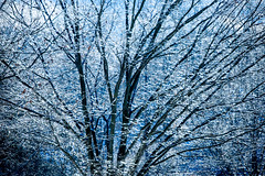 Backlight Beauty (jeanineleech) Tags: alleghenycounty february ice pa pennsylvania southpark countypark snow snowfall winter wintertime unitedstates usa