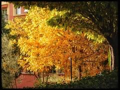 Yellow autumn.. (@ tameristan) Tags: autumn autumnleaves autumncolors tameristan leaf trees sun sunset colours nikonphotography nikona900 nikoncoolpixa900 green shadow light sunlight sarı yeşil ağaç orman forest lifeinizmir izmirdeyasam