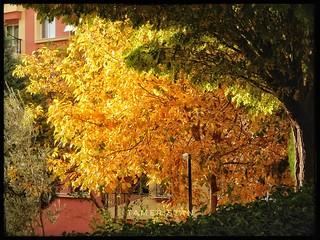 Yellow autumn..