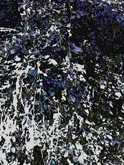 shapeless - formless - plant (wildoverwilde) Tags: plant nature art photography photomanipulation