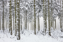 Snow (Martine Lambrechts) Tags: snow winter tree landscape nature frost wood forest road