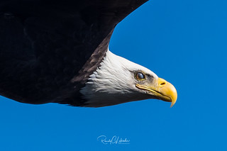 Bald Eagles of the Jersey Shore | 2018 - 14