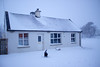 Our new house (Agnieszka Malik) Tags: home house cottage snowycottage winterinireland arklow cowicklow stormemma2018 thebeastfromtheeast scenery winter dog placetocallhome happy makingmemories redweatheralert blizzard