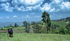 Ethiopia : Kibish, landscape #1 (foto_morgana) Tags: africa afrika afrique analogphotography analogefotografie clouds cow ethiopia ethnic ethnie etnia etniciteit kibish landscape mountainous nikoncoolscan omovallei omovalley outdoor panoramic photographieanalogue scenei scenic siurma suri travelexperience trees tribal tribe vallebajodelomo valléedelomo vuescan