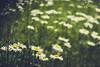 Flores (robertosanchezsantos) Tags: amberes antwerpen bélgica belgium europa europe viaje travel arte art abstracto abstract urbano urban textura geometría cielo ciudad líneas árbol