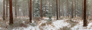 Plantation Snow