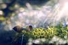 _DSC6467 (JuanCarlossony) Tags: bellota luz bokeh musgo sony 50mm slta58