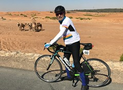 Camels along the Al Ain Cycling Track - UAE (Patrissimo2017) Tags: cycling camels