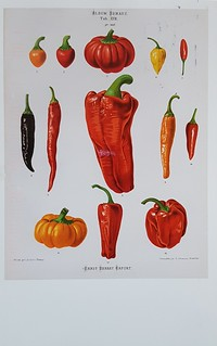 Pepper Album benary 1876-82