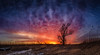 Fire in the Sky (tonesofcolor) Tags: wisconsin sunrises sunsets sunrise sunset sky color orange blue marsh panorama morning evening trees tree swamp beauty love canon dslr joy peace serenity calmness clouds dawn dusk winter popular dramatic rural hope grace mercy nature fineart art weather horizon outdoors twilight landscape glow