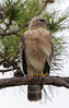 01-22-18-0000379 (Lake Worth) Tags: animal animals bird birds birdwatcher everglades southflorida feathers florida nature outdoor outdoors waterbirds wetlands wildlife wings