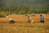 IMG_0468 (Kalina1966) Tags: bali island indonesia people rice field