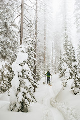 Skinning up Mt. Roberts (JeffAmantea) Tags: skinning mt roberts ski skiing winter snow trees cold fog mist girl touring alpine randonee freeride powder sony a7ii sonyalpha alpha emount mirrorless metabones nikon nikkor 50mm 14